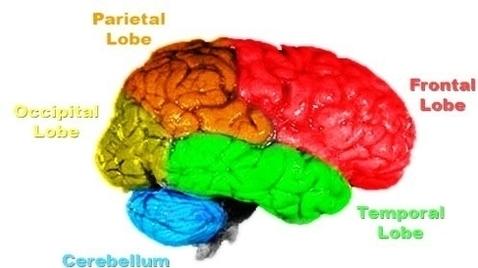 Brain Diagram Colored Auto Electrical Wiring Diagram