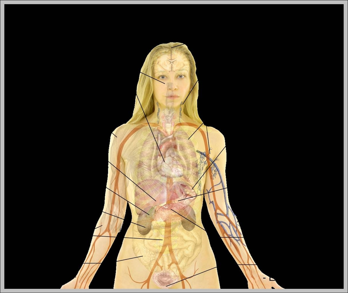 Female Body Diagram Anatomy System Human Body Anatomy Diagram