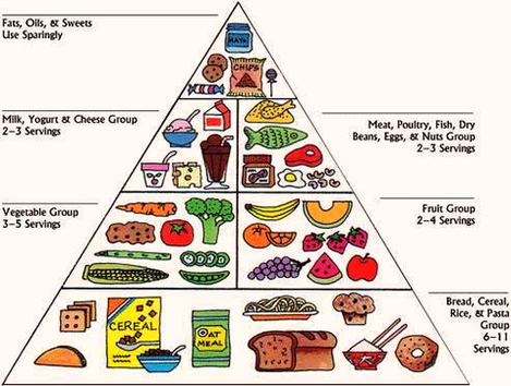 food pyramid food pyramid anatomy system human body anatomy diagram and chart