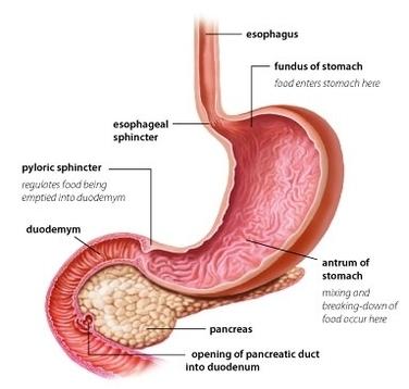 Anatomy Diagram Anatomy System Human Body Anatomy Diagram And