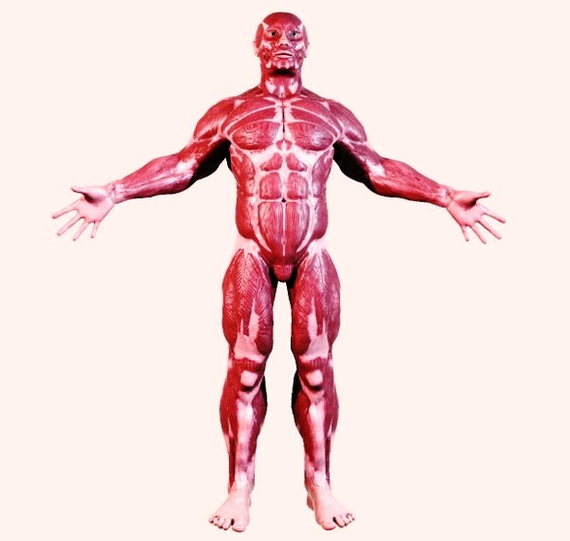 Muscles Anatomy System Human Body Anatomy Diagram And Chart