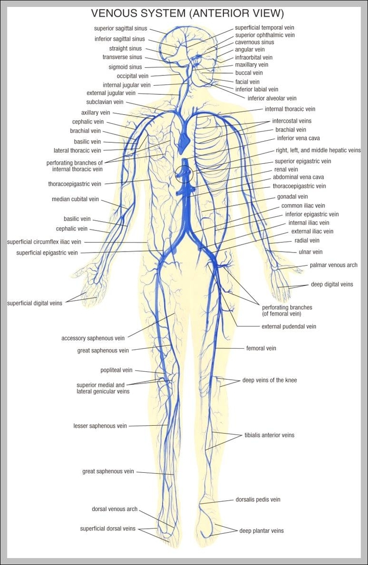 Human body nervous system diagram 7441195 anatomy system human human body nervous system diagram 7441195 ccuart Choice Image