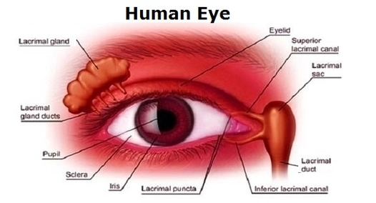 Human eye anatomy system human body anatomy diagram and chart images ccuart Choice Image