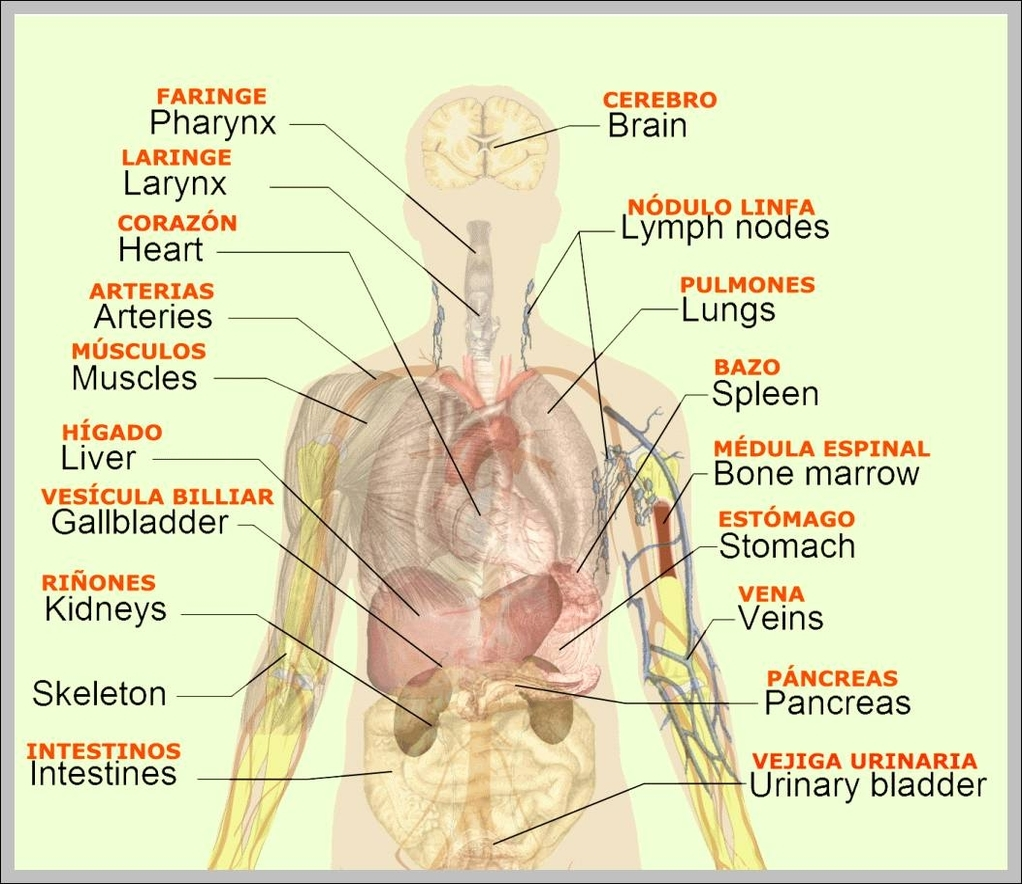 Female Lymphatic System Diagram Labeled, Female, Free ...