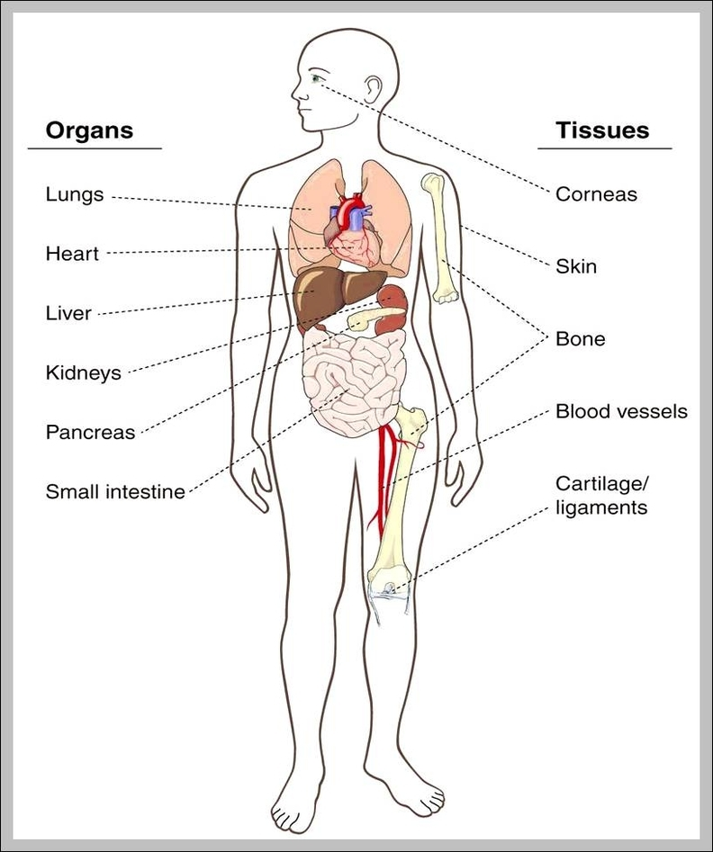 Anatomy System - Human Body Anatomy diagram and chart images | Human ...