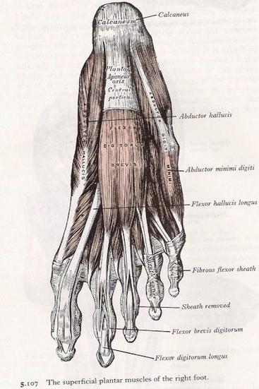 Foot Anatomy Diagram Anatomy System Human Body Anatomy Diagram