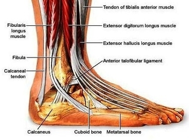how to avoid a sprained ankle
