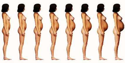 Pregnancy stages week by week with photos