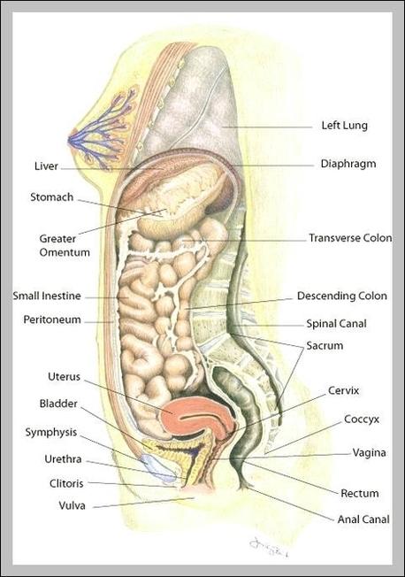 Diagrams Anatomy System Human Body Anatomy Diagram And Chart